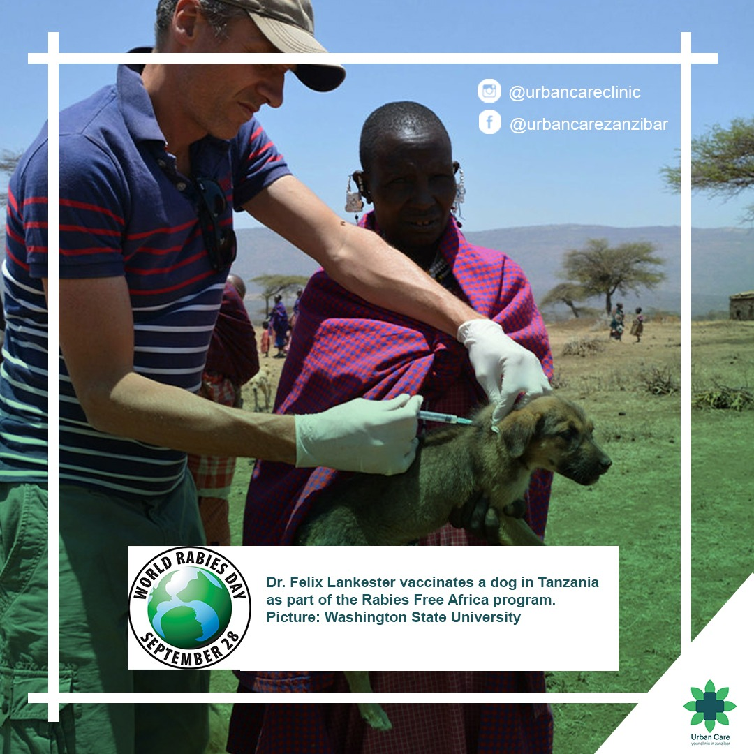 doctor vaccinating dog against rabies